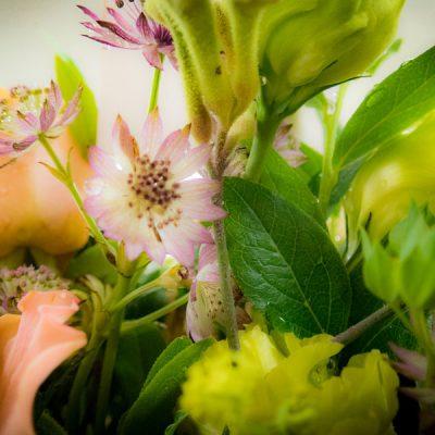 tomotomo からの美しいお花たち