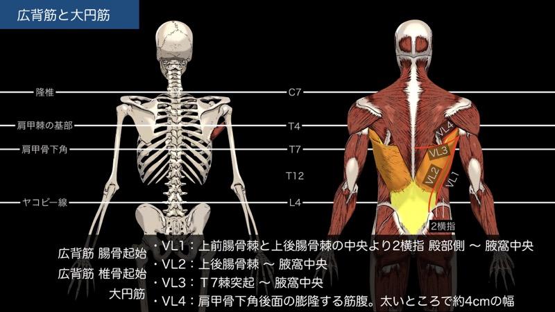 広背筋と大円筋の触察法1