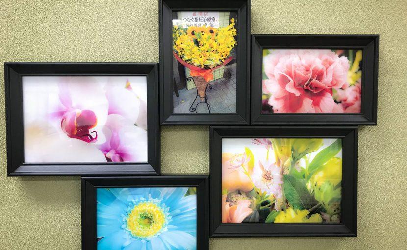開業祝いで頂いたお花たちの写真を飾ってみました