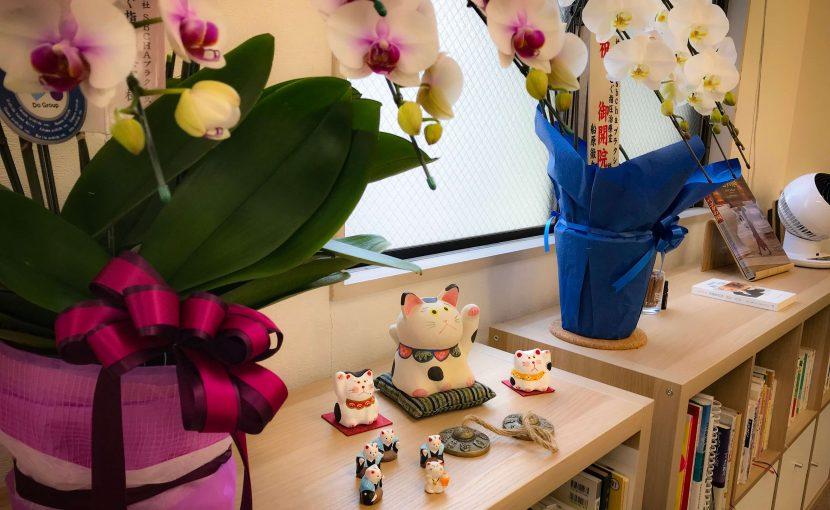 胡蝶蘭と招き猫