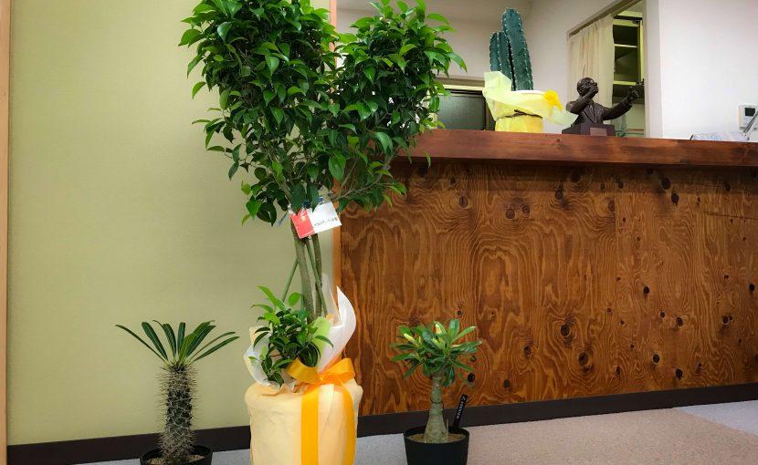 ユニバーサルオステオパシー研究会からいただいた植物さん