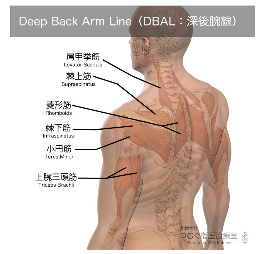 ディープバックアームライン・Deep Back Arm Line(DBAL:深後腕線)